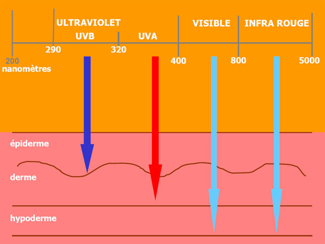 3.2-UVB and UVA rays in the light of science_illu-1